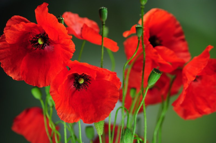 """Remembrance Day Reflection""-November 10, 2019"