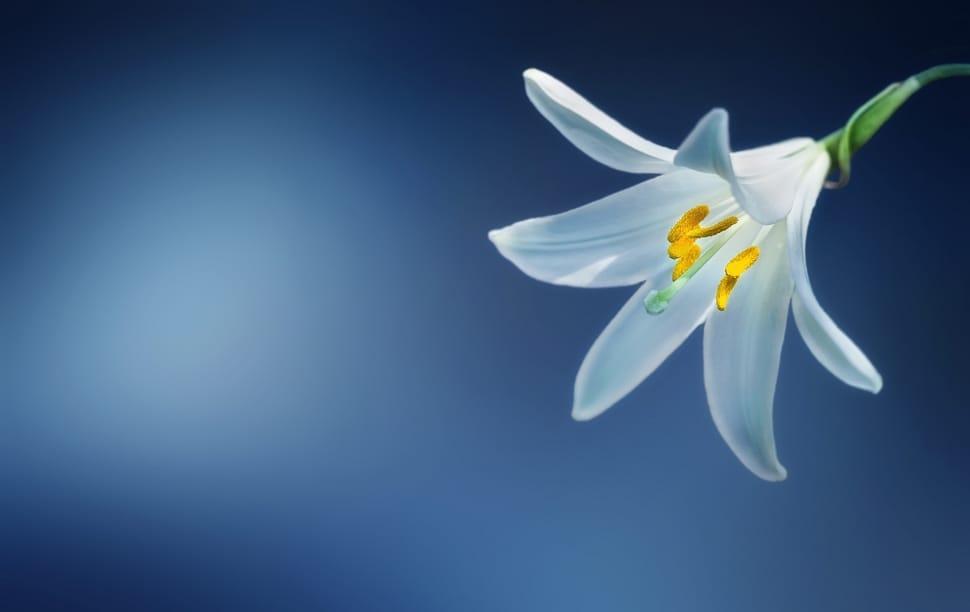 Easter Sunday Reflection-April 12, 2020